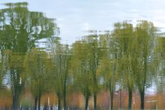 Stock Photo of Reflection of Trees in Reflecting Pool, Washington, DC, USA