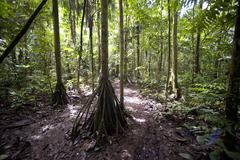 Amazon Rainforest, Sacha Lodge, Ecuador Stock Photos