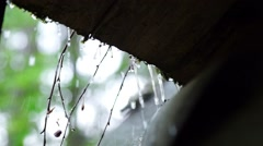 Heavy rain in summer wood Stock Footage