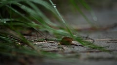 Snail's Pace - stock footage