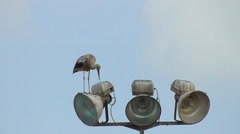 One stork standing on the lantern Stock Footage