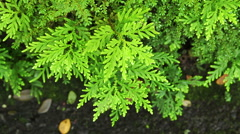 Fern leaf in the forest and wind, top view Stock Footage