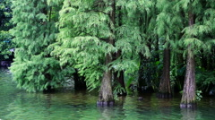 forest by the lake,guilin - stock footage