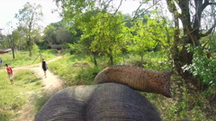 Elephant trunk reaching above head during safari in forest. Stock Footage