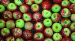 Apple sorting and packing factory Arkistovideo