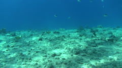 Colorful fishes on reef 04 dahab Stock Footage