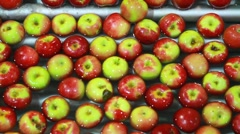 apple sorting and packing factory - stock footage