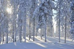 Kuusamo, Northern Ostrobothnia, Oulu Province, Finland - stock photo