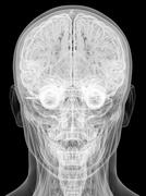 X-ray view of human head isolated on black background Stock Illustration