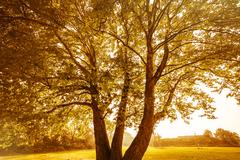 Back lit image of an autumn tree Stock Photos