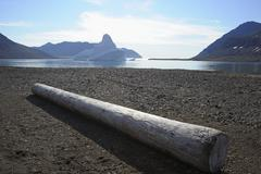 Tree Trunk on Beach, Romer Fjord, East Greenland, Greenland - stock photo