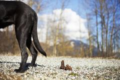 Dog and Excrement, British Columbia, Canada - stock photo