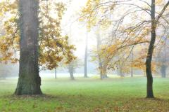 Stock Photo of Oak Tree Trunks and Autumn Foliage in Forest Glade in Morning Haze, Bavaria,