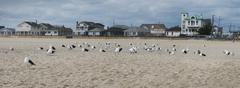 Panoramic View of Beach Houses on Jersey Coast, Point Pleasant, New Jersey, USA Kuvituskuvat