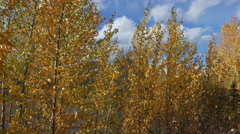 Autumn Leaves by Mountain Lake in Wind 4K Stock Footage