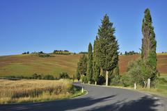 Stock Photo of Road with Cypress Trees in Summer, Pienza, Val d'Orcia, Province of Siena,