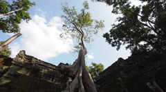 Timelapse View of Famous Tree at Ta Prohm Temple, Angkor, Siem Reap, Cambodia Stock Footage