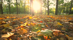 Beautiful autumn city park at sunset. Dolly shot - stock footage