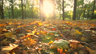 Stock Video Footage of Beautiful autumn city park at sunset. Dolly shot