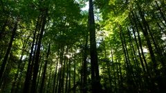 Sun Through Forest Time Lapse Stock Footage