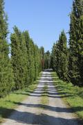 Rural dirt path lined with Cypress Trees (Cupressus sempervirens). Pienza, Siena - stock photo