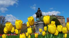 George Washington Yellow Tulips Stock Photos