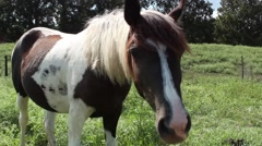 Horse close to camera, mild lens flare Stock Footage