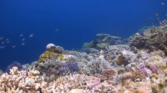 Colorful coral reef with many Fish Stock Footage