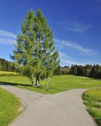 Forked Road in Spring, Bernbeuren, Upper Bavaria, Bavaria, Germany - stock photo