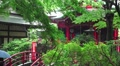 Umbrella Woman Crosses Red Bridge To Shinto Temple In Forest Rainy Day HD Footage