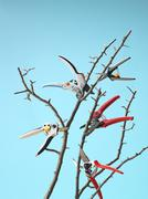 Pruners Cutting Branches while Floating in Mid Air, Studio Shot - stock photo