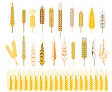 set of icons for ears of wheat and cereals - stock illustration