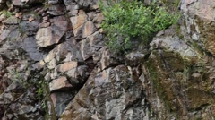 Wind Blowing Bushes and Water Runoff on Natural Rock Surface Stock Footage