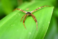 Long legs spider on a green leaf - stock photo