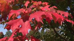 Autumn fall harvest festival on family farm Stock Footage