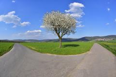 Forked Road with Blossoming Cherry in Spring, Miltenberg, Spessart, Franconia, - stock photo