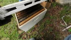 Opening Bee hive for the first time Stock Footage