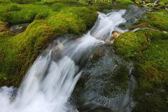 Flowing Water through Moss Covered Rocks, Trentino-Alto Adige, Dolomites, Italy Stock Photos