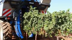 grape harvest - stock footage