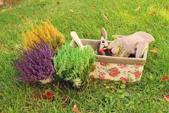 Gardening - heather planting Stock Photos