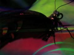 VJ LOOP - Lucid Butterfly Silhouette - stock footage