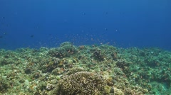 Coral reef with Anthias and Surgeonfish - stock footage