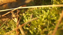 Small insect in the young grass Stock Footage