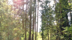 sunny forest (2) - stock footage