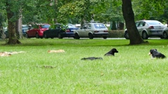 Stray dogs lying on grass in the park Stock Footage
