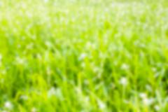 green color blurry abstract background - stock photo
