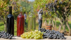 Red, white and rosé wine. Women harvesting grapes on background. - stock footage