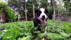 Baby McNabb puppies running and playing in the clover - stock footage