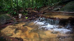 Water stream at tropical forest in HD resolution Stock Footage