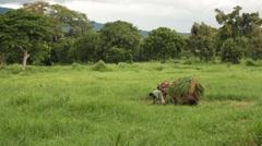 Farmer and a Horse Drawn Hay Wagon Stock Footage